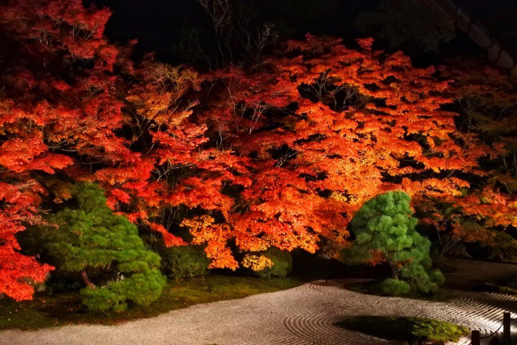 京都紅葉便り🍁